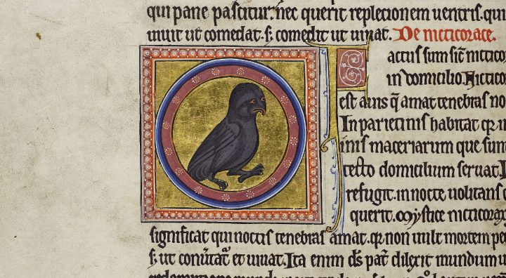 Detail of folio 35v from the Aberdeen Bestiary showing a night owl in a roundel