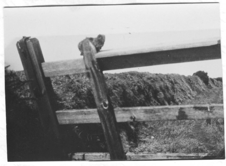 """Alleged photograph of Gef, showing him """"in distinctly cat-like form"""" (May 1936) from <em srcset="""