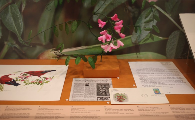 Display view of examples of Hawai'ian plants
