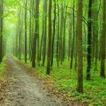 Cronache nemdiane – L'ambiguo confine: foreste e uomini nell'Alto Medioevo
