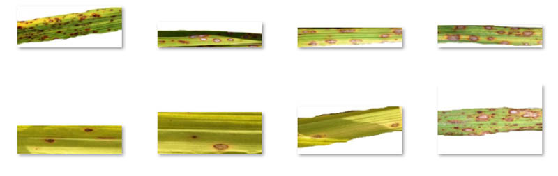 use computer vision to detect crop disease through image analysis with amazon rekognition custom labels 2 hyperedge embed