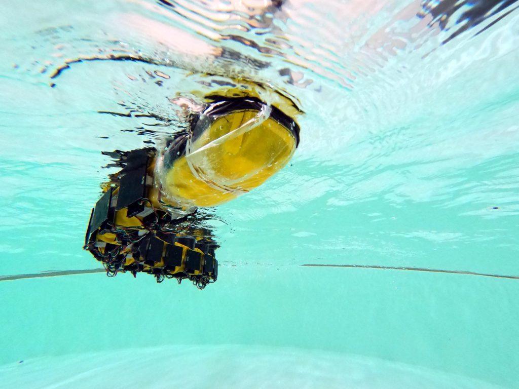 this strange robotic fish swims like a lamprey hyperedge embed