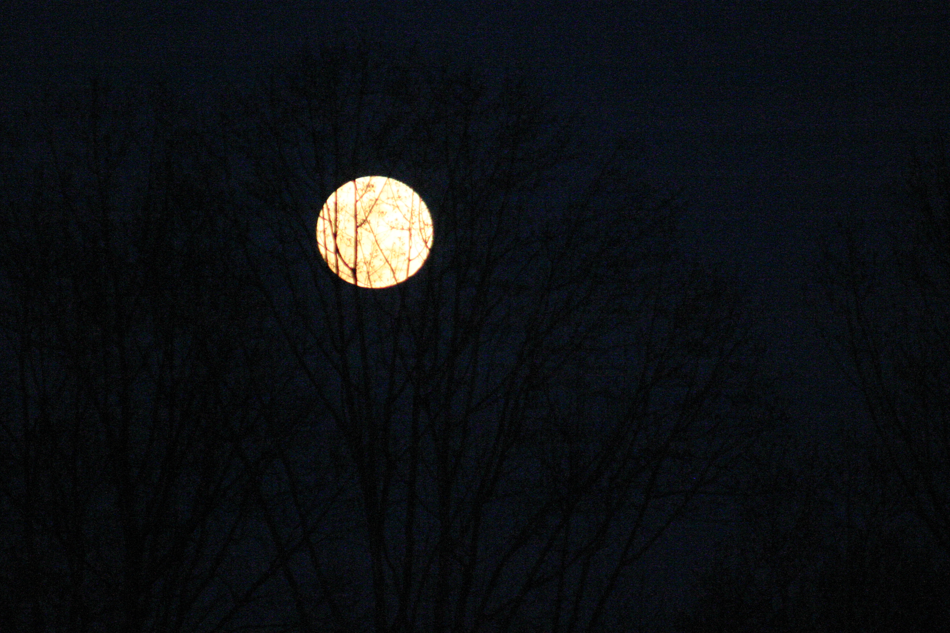 My photo: March 29, 2010 'March Moon Rising' – Good Enough for Halloween 2018