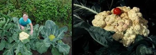 vegetal enorme
