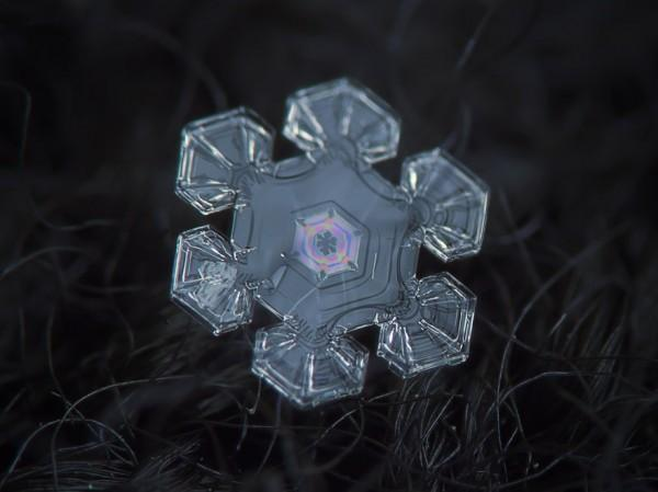 macro-photography-snowflakes-alexey-kljatov-15