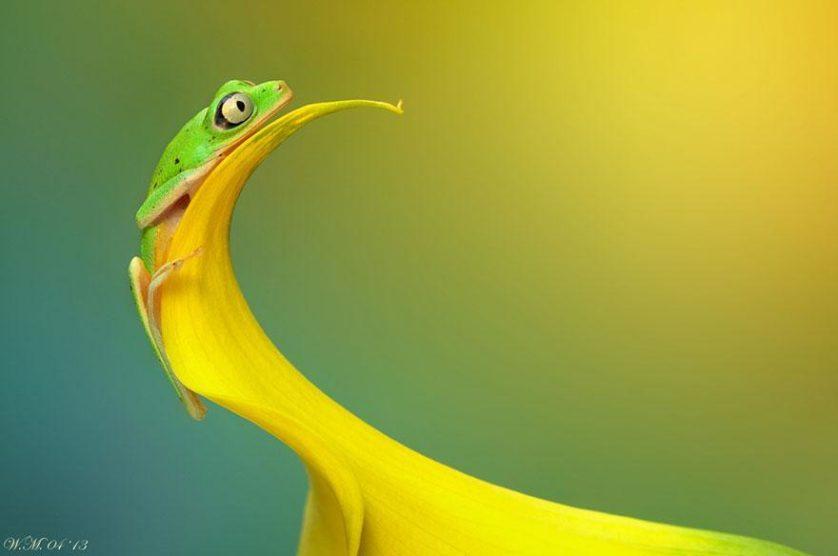 macro-frogs-wil-mijer-11