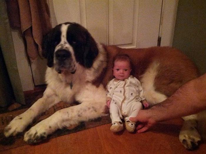 bebezinhos e seus caes (8)