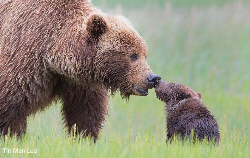 filhotes de ursos 3