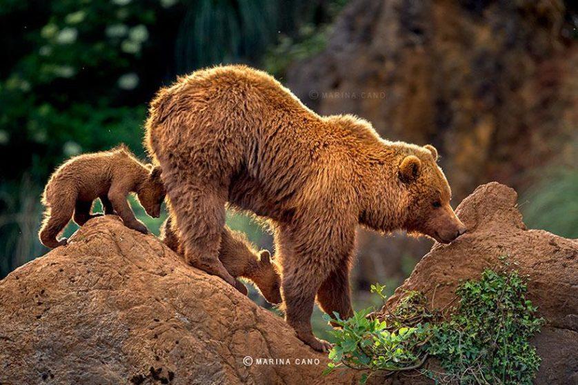 filhotes de ursos 9