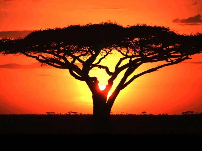 eva ancestral africa