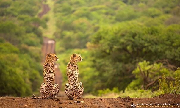 fotos de animais gemeos 21