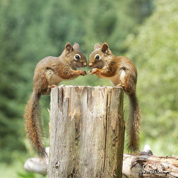 fotos de animais gemeos 25