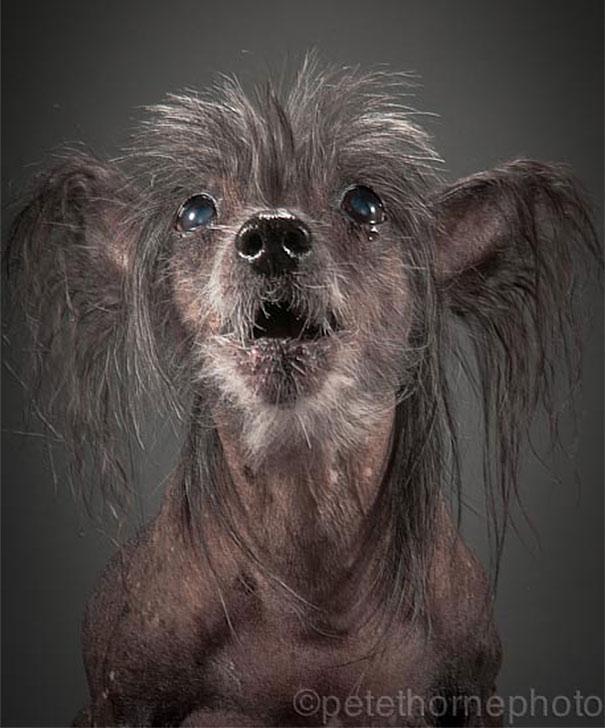 fotos de cachorros idosos 10