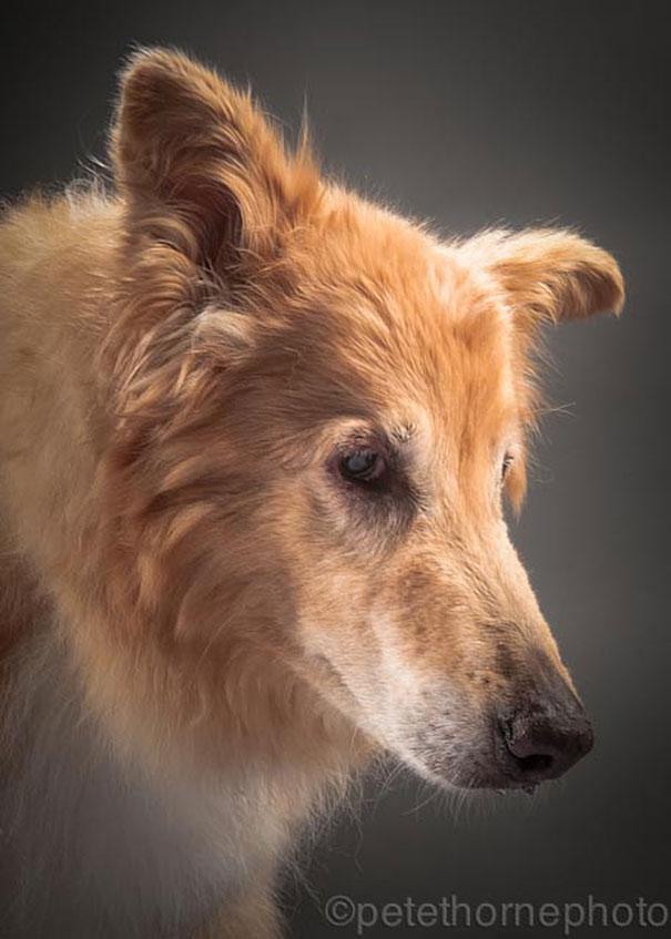 fotos de cachorros velhos 03