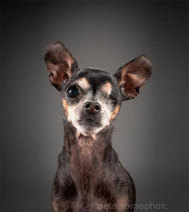 fotos de cachorros velhos 04