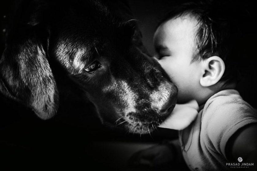 bebes e cachorros (1)