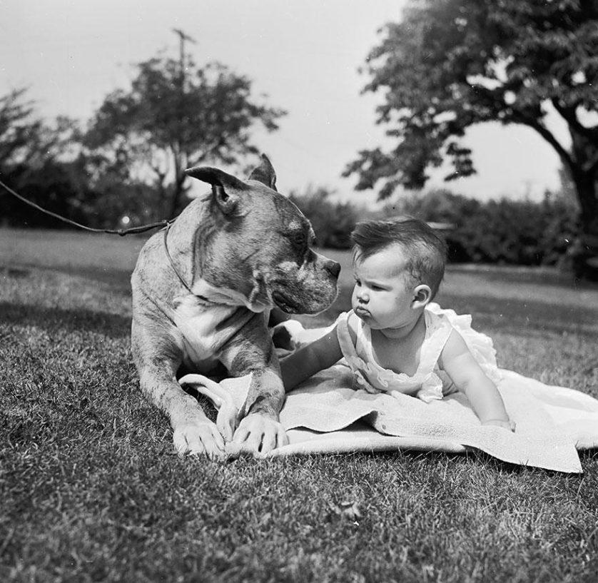 bebes e cachorros (12)