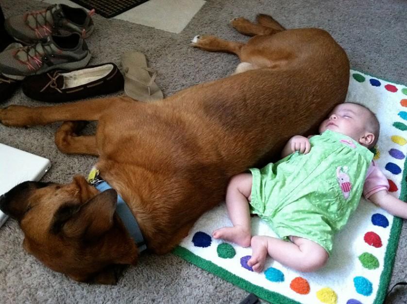 bebes e cachorros (13)