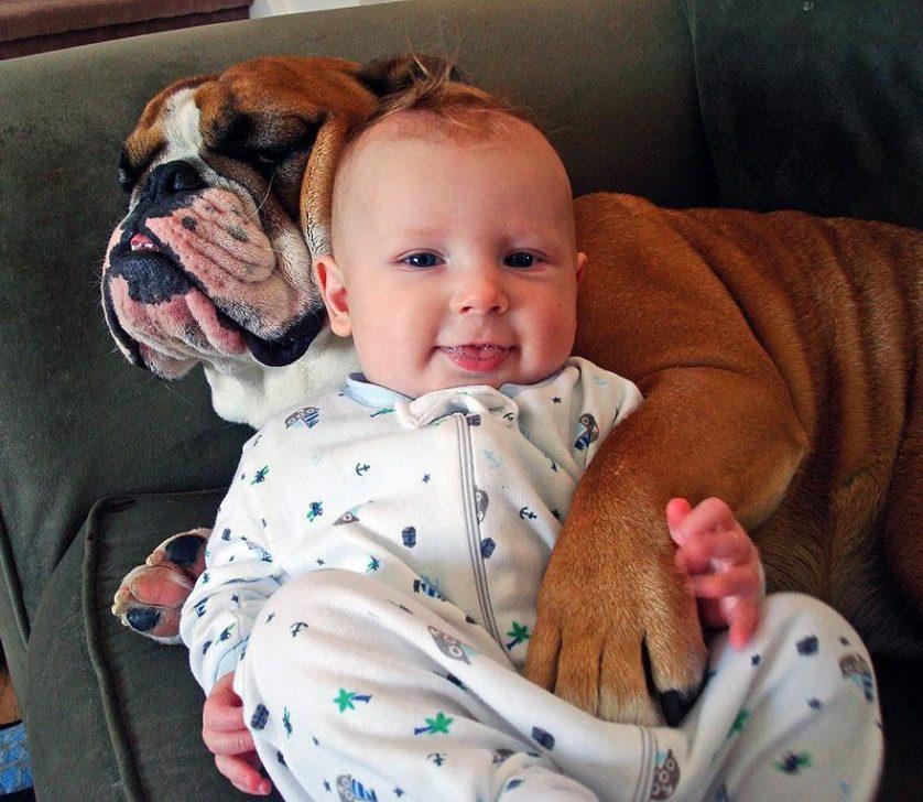bebes e cachorros (15)