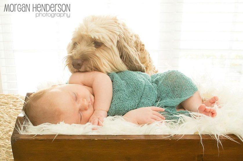 bebes e cachorros (3)
