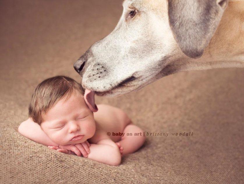 bebes e cachorros (9)