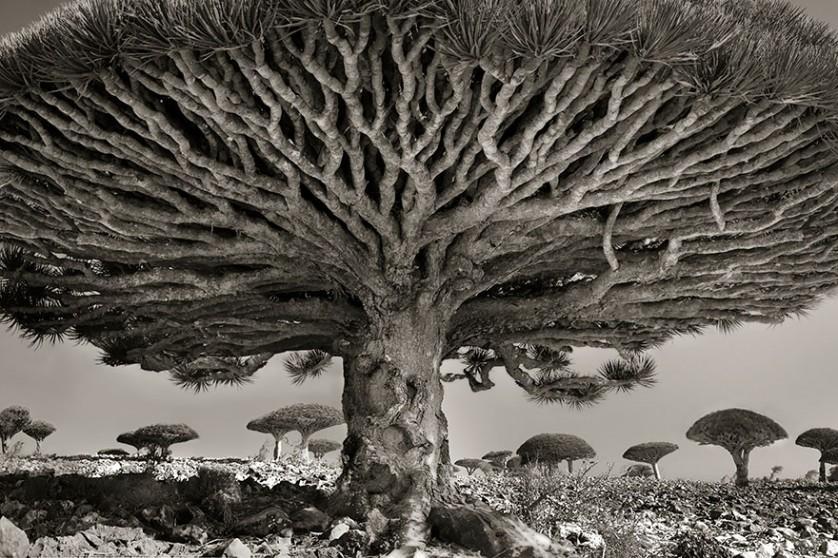 vecchi alberi 1