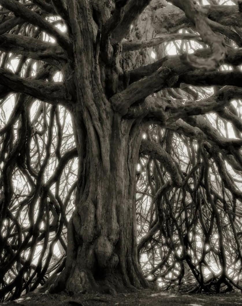 vecchi alberi 18
