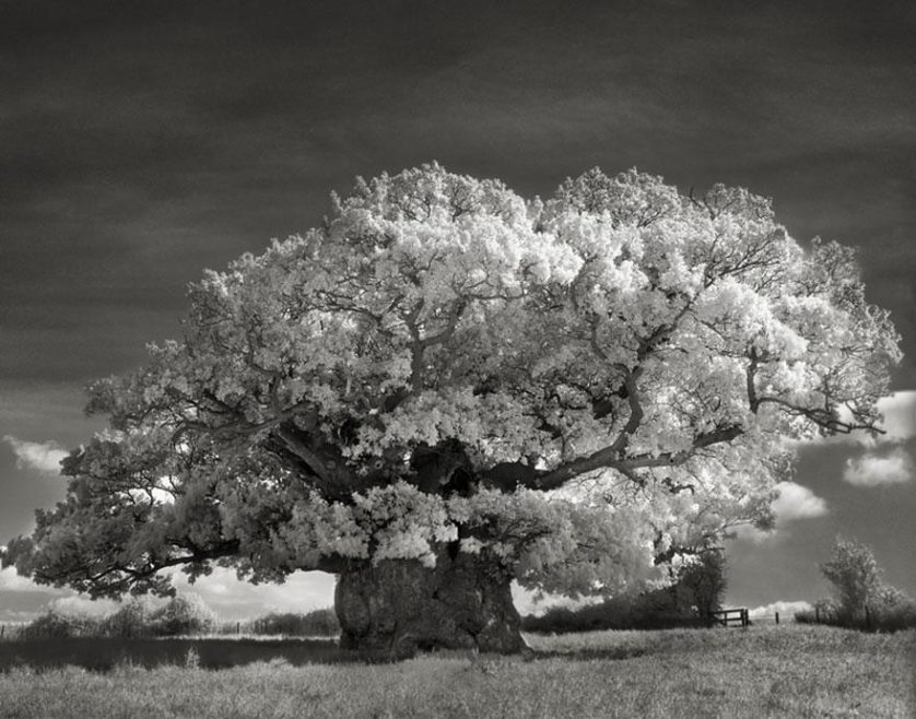 vecchi alberi 5