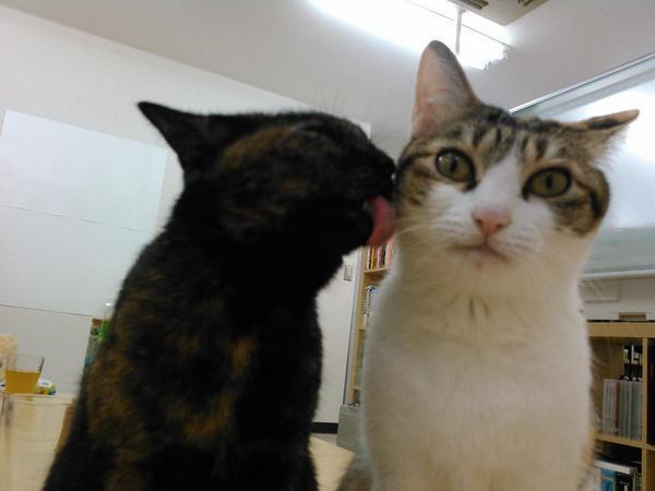 gatti ufficio Giappone (1)
