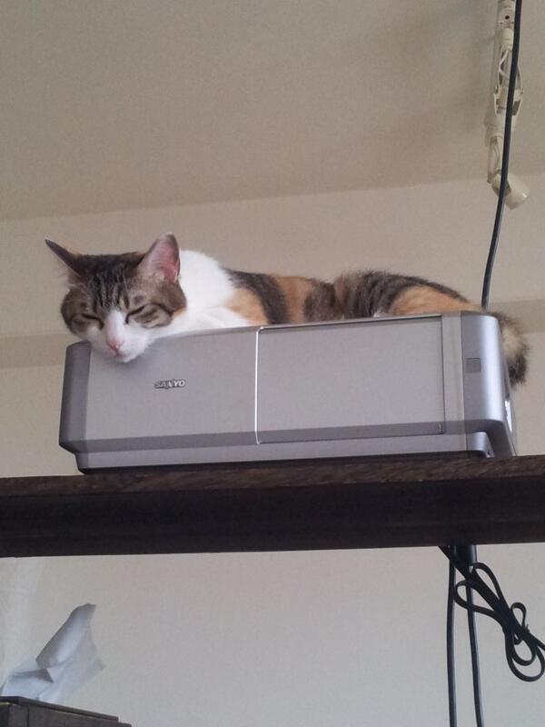 gatti ufficio Giappone (3)