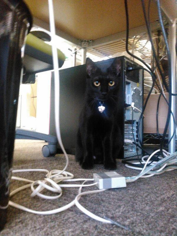 gatti ufficio Giappone (5)