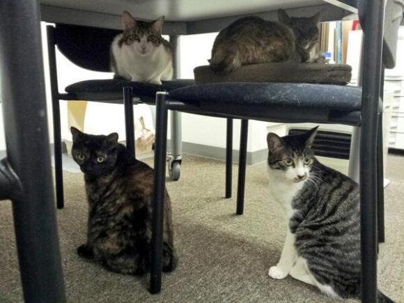 gatti ufficio Giappone (7)