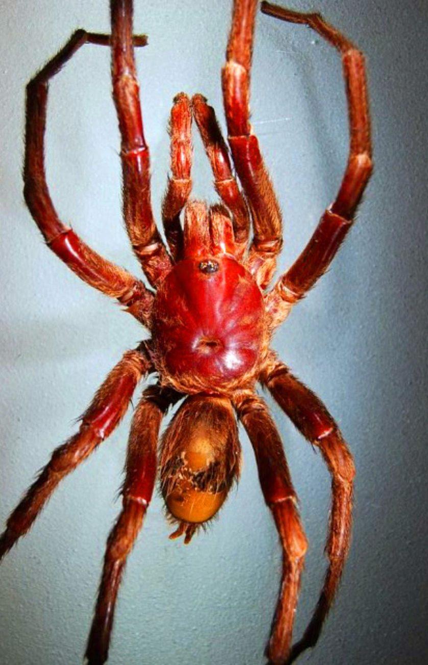 especies descobertas em 2014 15