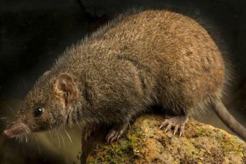 especies descobertas em 2014 7