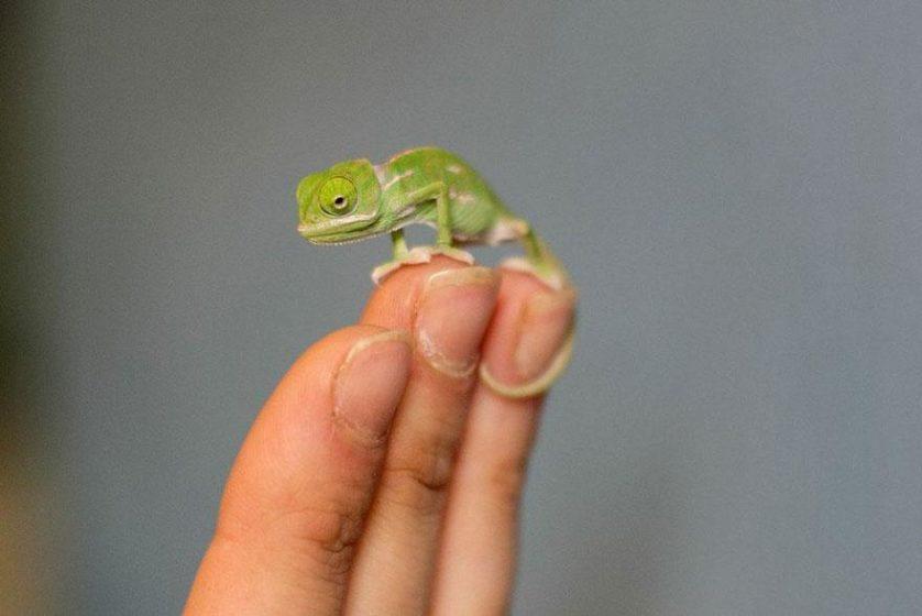 Chameleons Beverage (11)