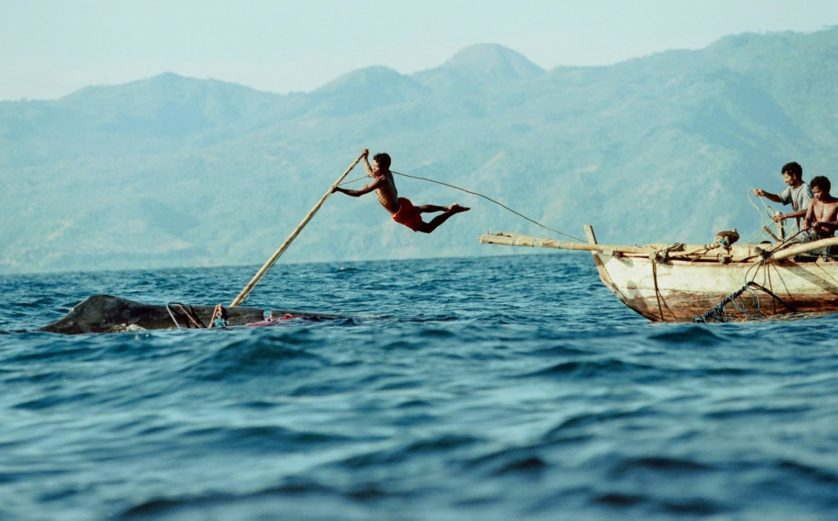 caca baleia lamalera (4)