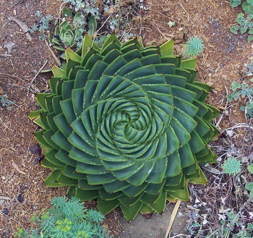 piante geometriche 1