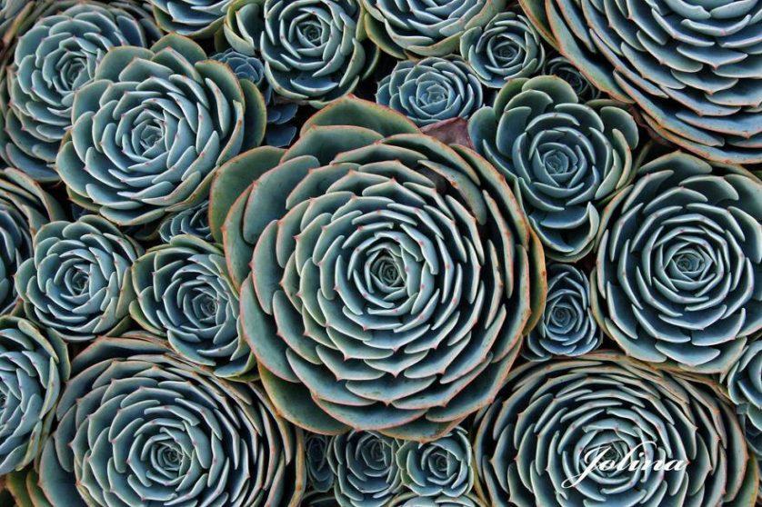 piante geometriche 17