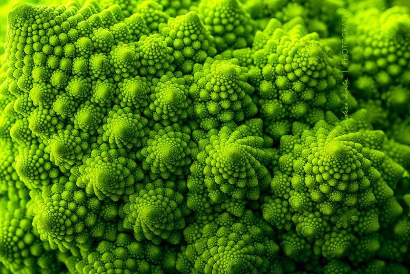 piante geometriche 2