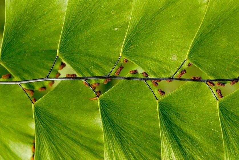 piante geometriche 20
