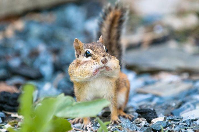 animais surpresos atonitos (19)