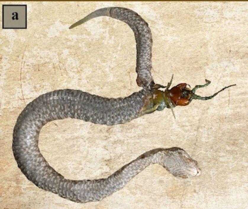 cobras gulosas 2