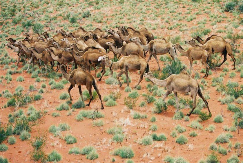 animais da australia 10