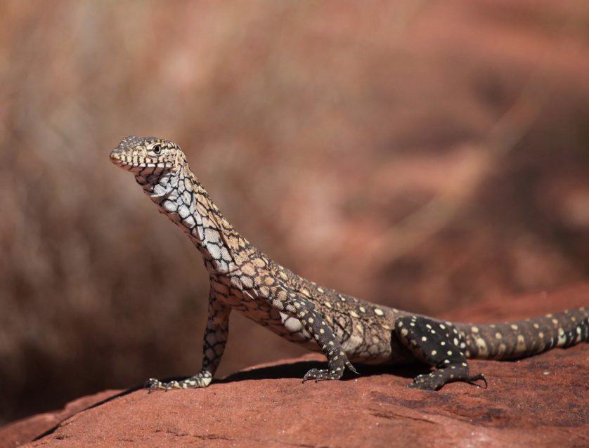 animais da australia 2