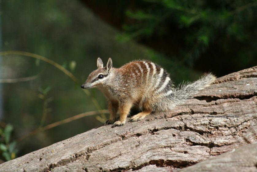 animais da australia 6