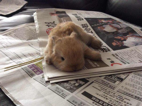 coelhos mais fofos (1)