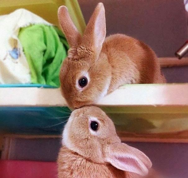 coelhos mais fofos (15)