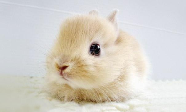 coelhos mais fofos (18)