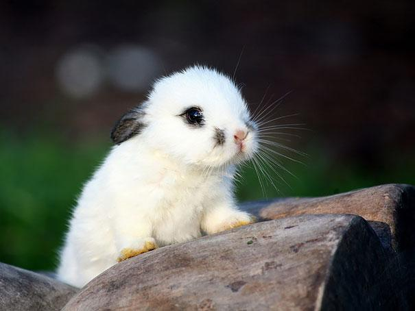 coelhos mais fofos (21)