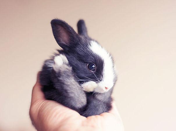coelhos mais fofos (23)